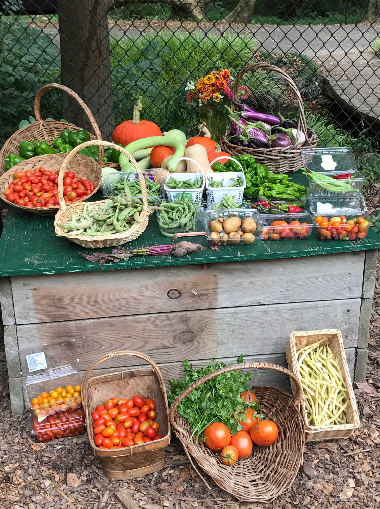 Master gardeners of northern virginia for Summer vegetable garden