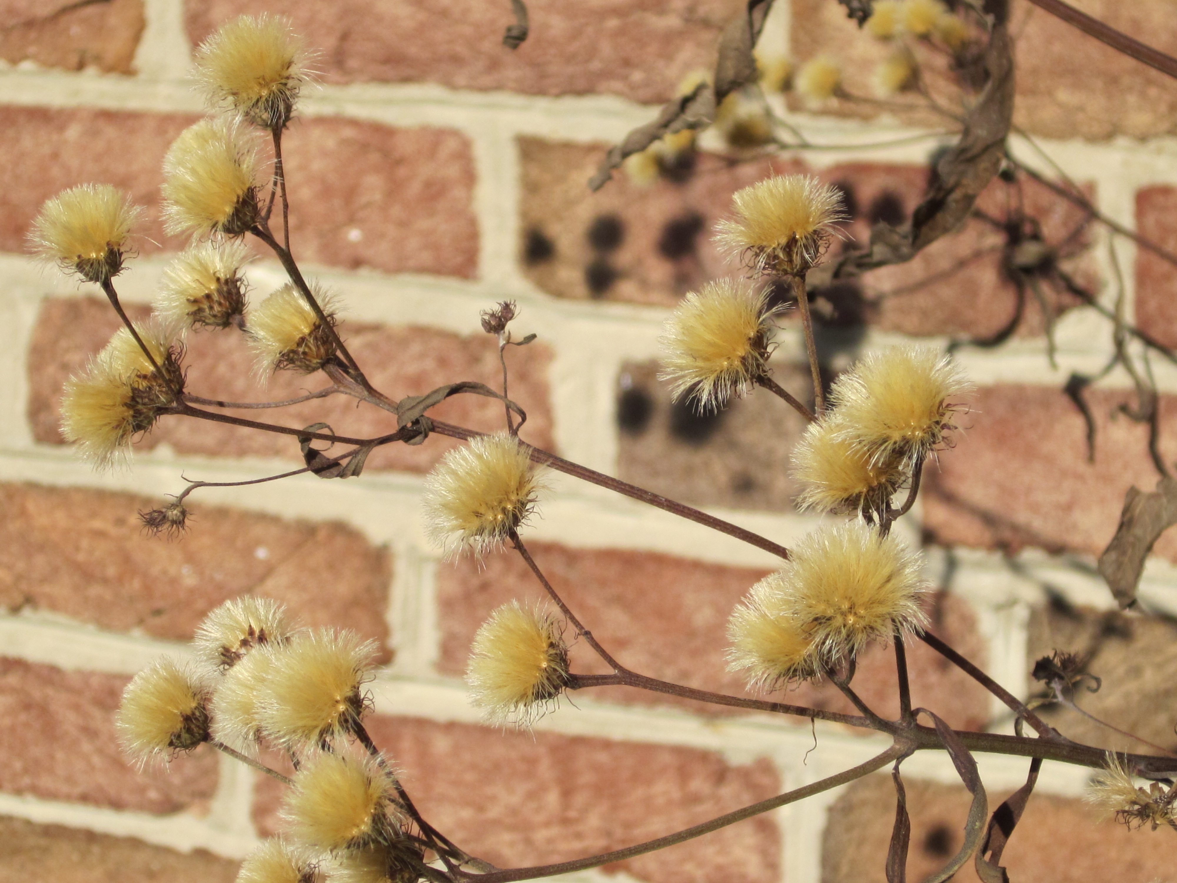 Native Plants for Winter Interest | Master Gardeners of Northern ...