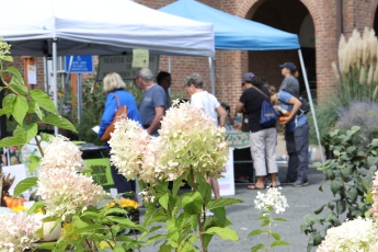 Hydrangea frames visitors getting information at the Master Gardener and Tree Steward tents.
