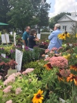 """MG Library Garden Coordinator Paul Nuhn consulting on """"right plant, right place."""""""