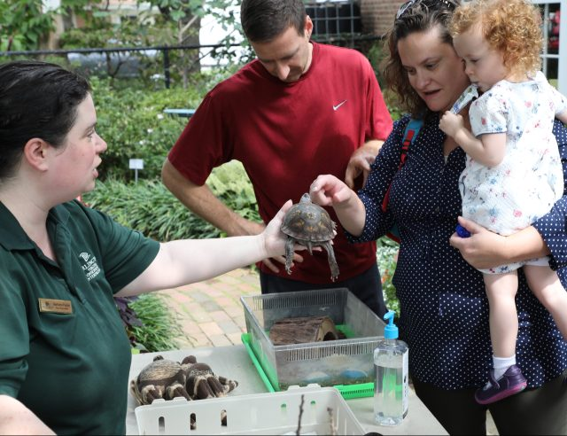 Bobbi Farley, Long Branch Nature Center Naturalist, shares Stumpy the box turtle with visitors