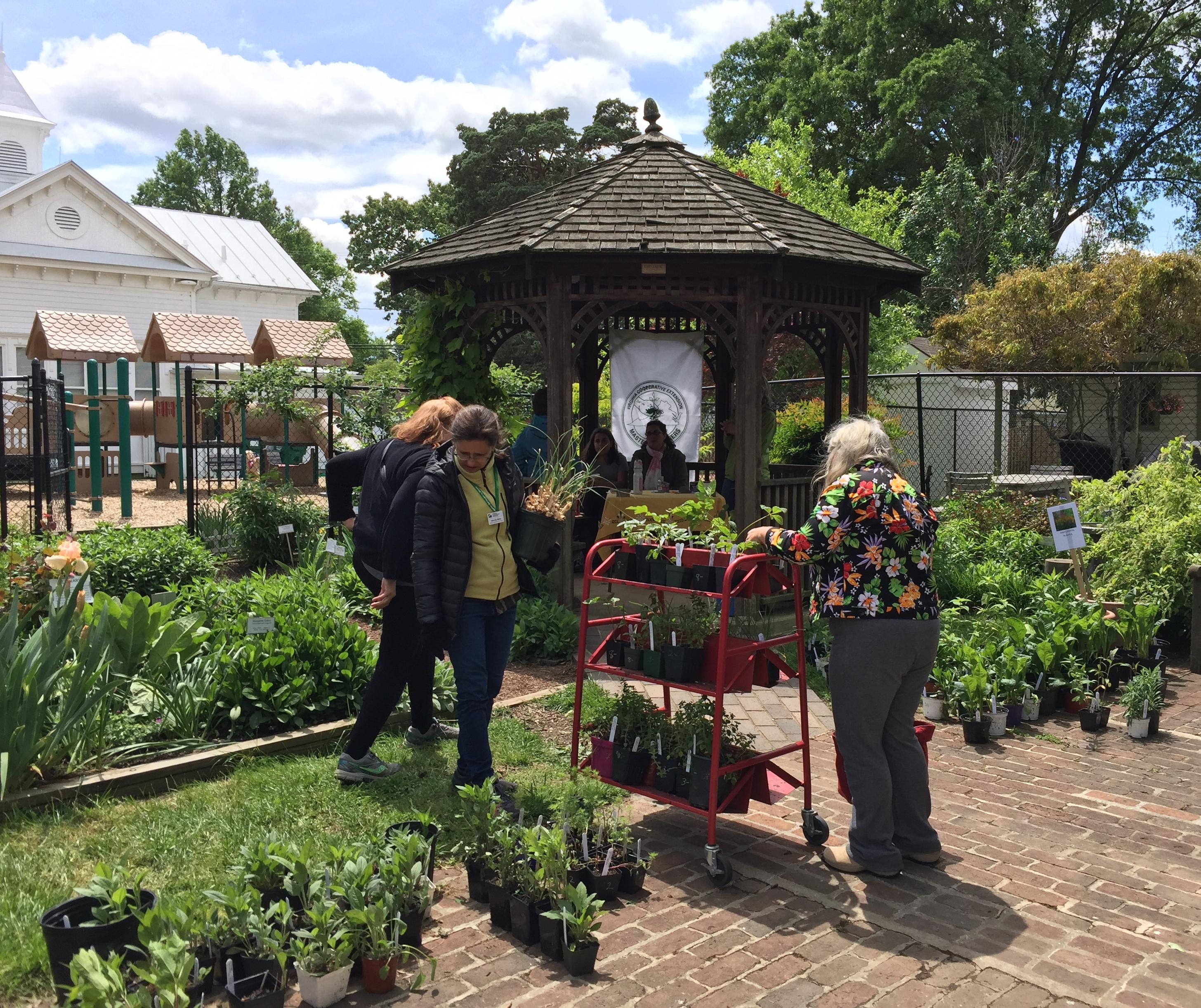 Quarry Shade Garden At Bon Air Park: Meet The Glencarlyn Library Community Garden Coordinators