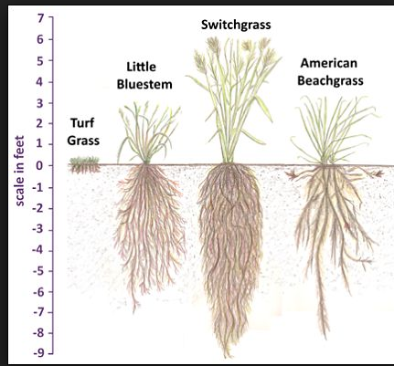 Various grass roots