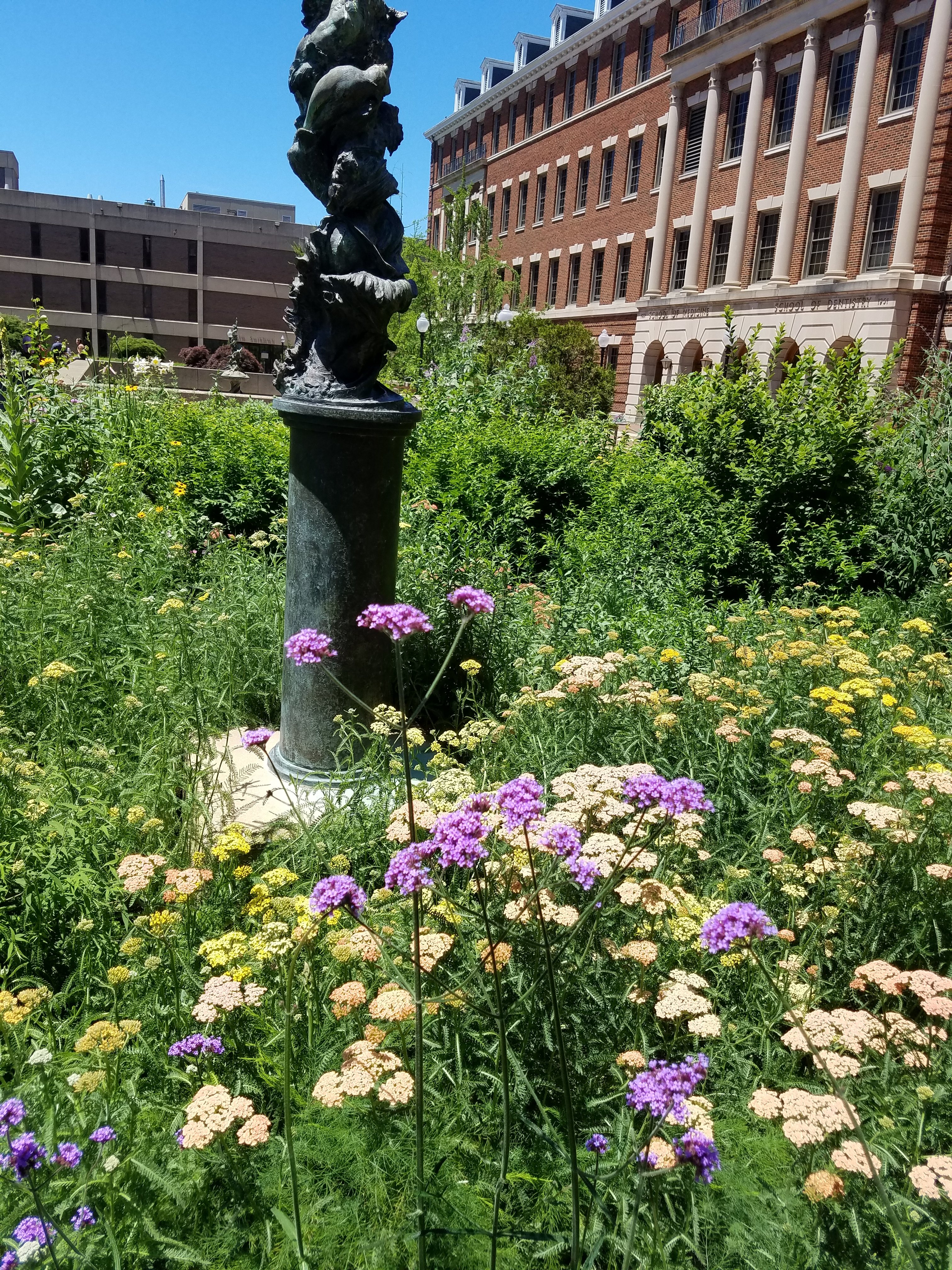 Statue In The Urban Herb Gardens At Georgetown University Medical Center