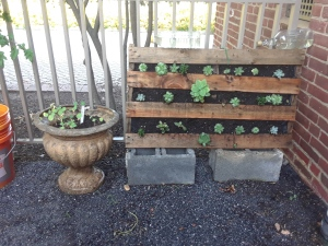 Small pallet garden of succulents