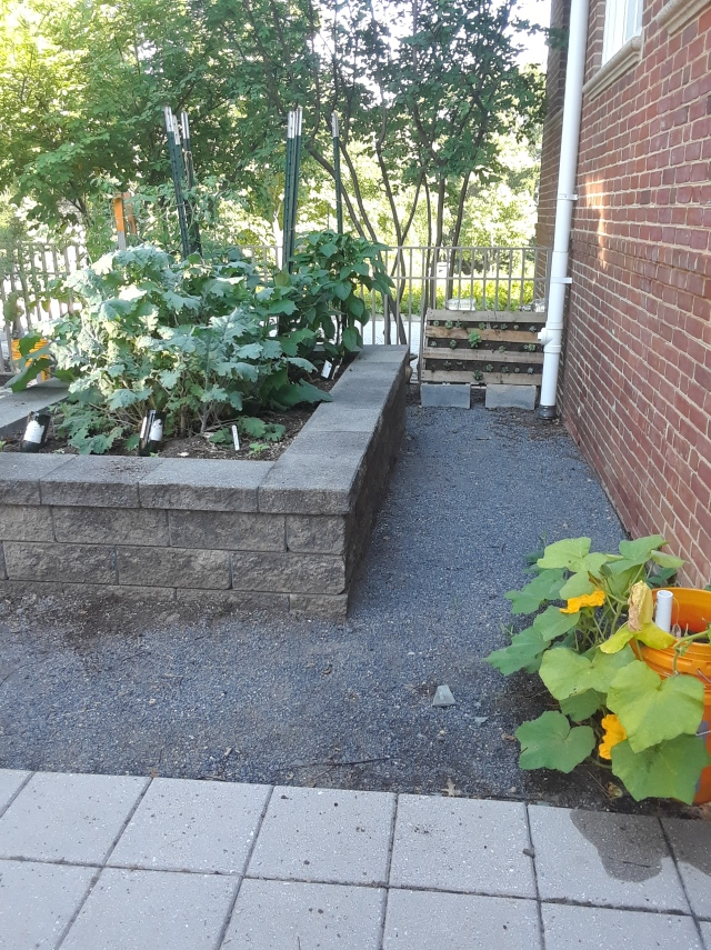 raised garden by back fence small pallet garden and squash plant in self watering - The Learning Garden