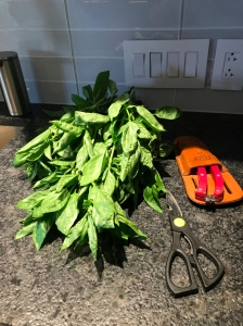 Fresh basil ready for cooking.