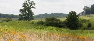Longwood Gardens - Summer in the Meadow Garden Photo 2013 by Daniel Traub