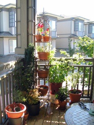 balcony garden Photo © 2008 Jennifer Feuchter