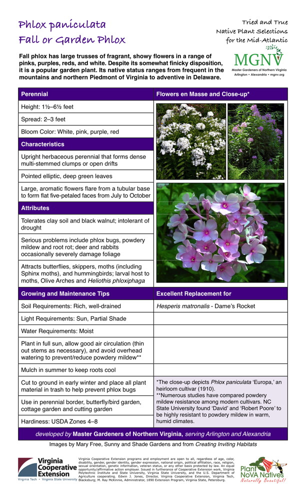 Phlox paniculata, Fall Phlox, Garden Phlox Perennial Height: 11⁄2–61⁄2 feet Spread: 2–3 feet Bloom Color: White, pink, purple, red Characteristics Upright herbaceous perennial that forms dense multi-stemmed clumps or open drifts Pointed elliptic, deep green leaves Large, aromatic flowers flare from a tubular base to form flat five-petaled faces from July to October Attributes Tolerates clay soil and black walnut; intolerant of drought Serious problems include phlox bugs, powdery mildew and root rot; deer and rabbits occasionally severely damage foliage Attracts butterflies, skippers, moths (including Sphinx moths), and hummingbirds; larval host to moths, Olive Arches and Heliothis phloxiphagaGrowing and Maintenance Tips Soil Requirements: Rich, well-drained Light Requirements: Sun, Partial Shade Water Requirements: Moist Plant in full sun, allow good air circulation (thin out stems as necessary), and avoid overhead watering to prevent/reduce powdery mildew** Mulch in summer to keep roots coolCut to ground in early winter and place all plant material in trash to help prevent phlox bugs *The close-up depicts Phlox paniculata 'Europa,' an heirloom cultivar (1910). **Numerous studies have compared powdery mildew resistance among modern cultivars. NC State University found 'David' and 'Robert Poore' to be highly resistant to powdery mildew in warm, humid climates. Use in perennial border, butterfly/bird garden, cottage garden and cutting garden Hardiness: USDA Zones 4–8  Excellent Replacement for Hesperis matronalis - Dame's Rocket