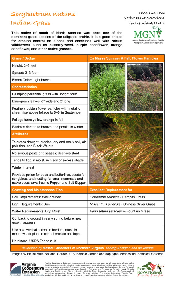 "Sorghastrum nutans, Indian Grass Grass / Sedge Height: 3–5 feet Spread: 2–3 feet Bloom Color: Light brown Characteristics Clumping perennial grass with upright form Blue-green leaves 1⁄2"" wide and 2' long Feathery golden flower panicles with metallic sheen rise above foliage to 5–6' in September Foliage turns yellow-orange in fall Panicles darken to bronze and persist in winter Attributes Tolerates drought, erosion, dry and rocky soil, air pollution, and Black Walnut No serious pests or diseases; deer-resistant Tends to flop in moist, rich soil or excess shadeWinter interestProvides pollen for bees and butterflies, seeds for songbirds, and nesting for small mammals and native bees; larval host to Pepper-and-Salt Skipper Growing and Maintenance Tips Soil Requirements: Well-drained Light Requirements: Sun Water Requirements: Dry, Moist Cut back to ground in early spring before new growth appears Use as a vertical accent in borders, mass in meadows, or plant to control erosion on slopes Hardiness: USDA Zones 2–9 Excellent Replacement for Cortaderia selloana - Pampas Grass Miscanthus sinensis - Chinese Silver Grass Pennisetum setaceum - Fountain Grass"
