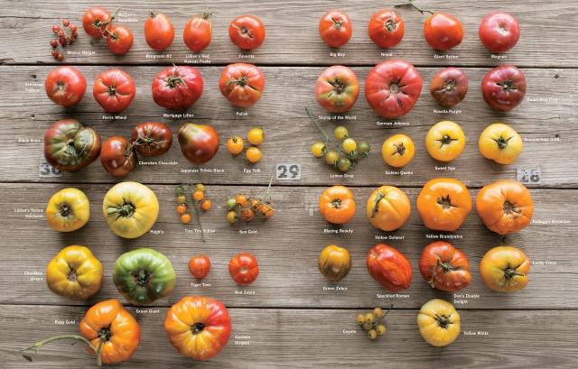 Photographic display of heirloom tomato varietes.