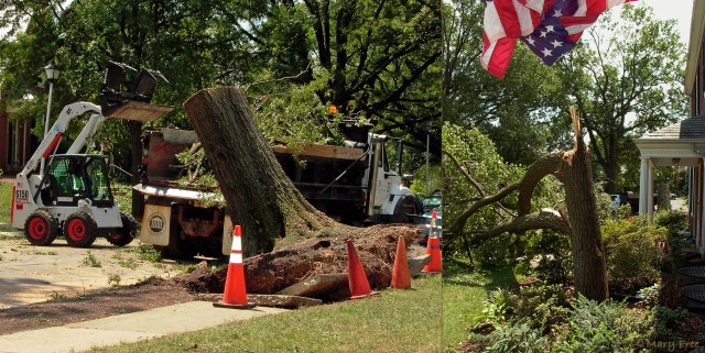 Arlington County, Virginia responded quickly to deal with the aftermath of a microburst during a violent thunderstorm that descended on the Fairlington neighborhood on August 5, 2010. Raging 70–80-mile-per-hour winds reportedly toppled nearly 100 mature trees, and many more were so damaged that they could not be saved over the following weeks and months. © 2019 Mary Free