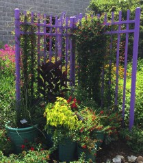 The Norfolk Botanical garden uses a themed grouping of pots in their hummingbird garden. Photo © Elaine Mills.