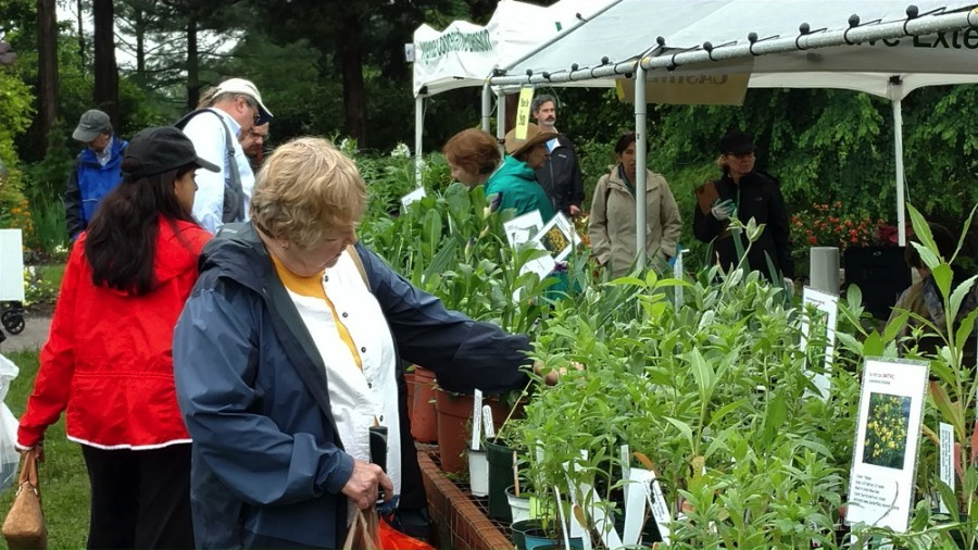 Browsing the many plants on offer. Photo © 2018 Alison KIndler