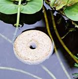 Mosquito dunk in pond