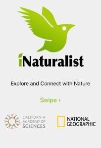 iNaturalist App ScreenShot