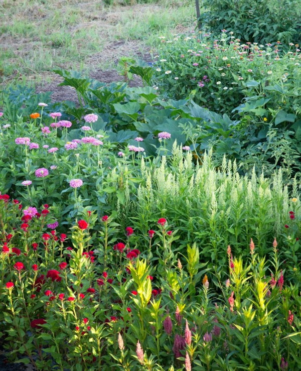 Vegetables and flowers interplanted
